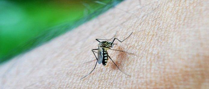 Inilah Beberapa Faktor yang Disukai Nyamuk