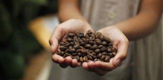 kualitas kopi