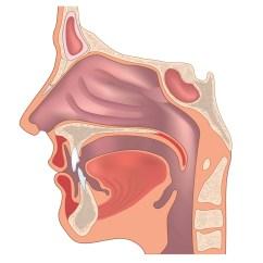 Ear Nose And Throat Diagram 1999 Peterbilt 379 Wiring Doctor Uc Irvine Medical Center