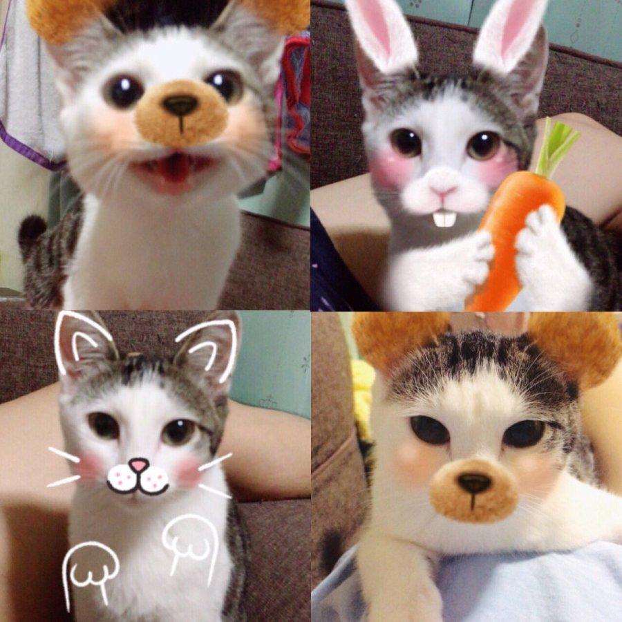 SNOWで動物(犬や猫等)に顔認識させるコツ!これでできる!