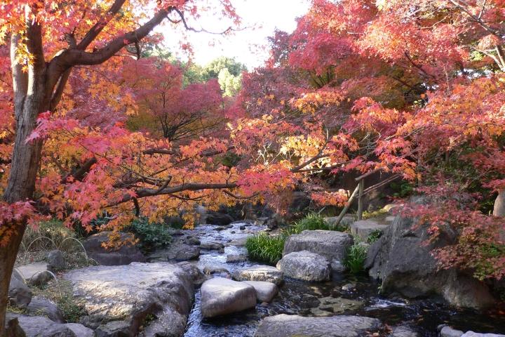 白鳥庭園の紅葉の2017年の見頃はいつ?ライトアップの時期や混雑具合も