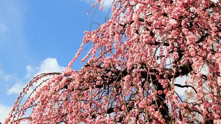 立春の候の時期や読み方!意味やいつまで使うか、使い方や例文も