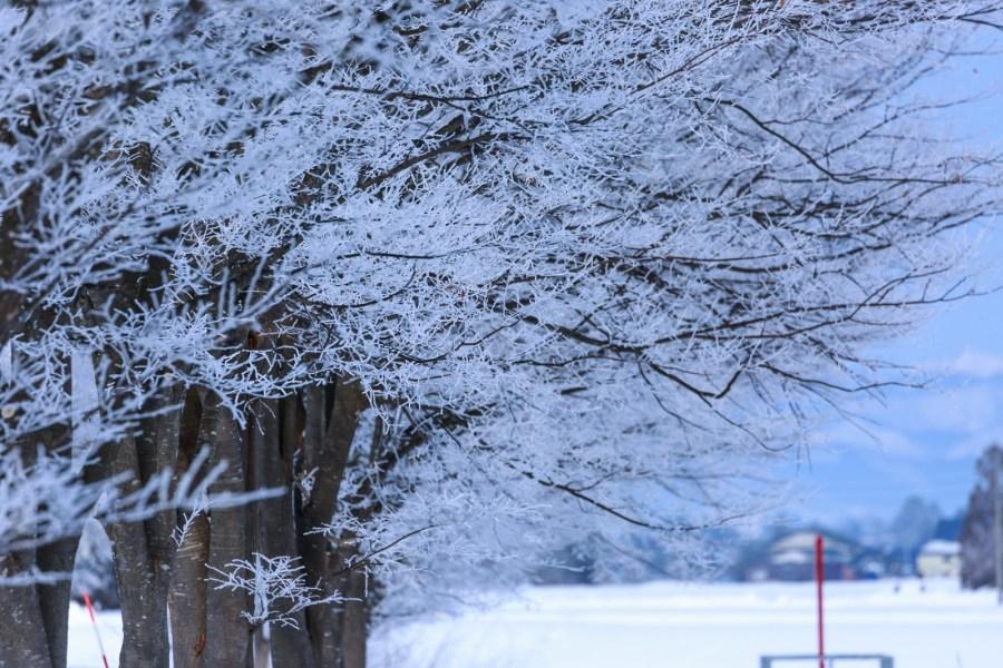 厳冬の候の読み方と意味!時期、いつまで使うか、時候の挨拶の例文も