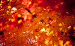 秋といえば?旬の食べ物や、行事やイベント、風物詩等もご紹介!