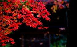 清秋の候の意味や読み方は?時期はいつ・いつまで使える、例文や結びも