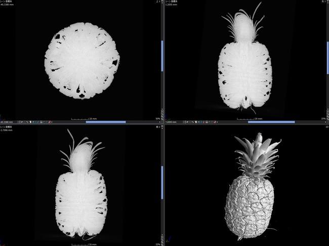 パイナップルのCTスキャン画像