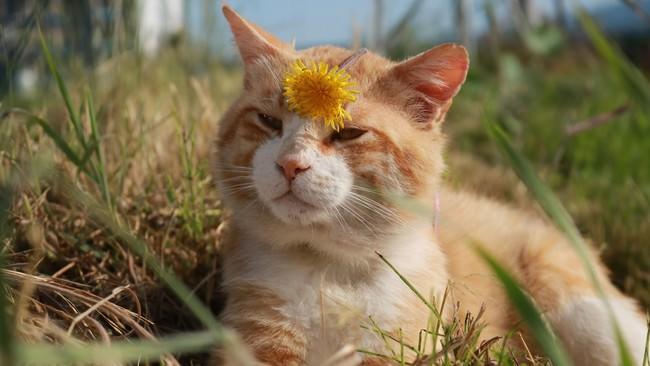 畑の番人?!農園のネコちゃんが続々登場!「旅猫ロマン 傑作選」第9話 旅チャンネルで放送