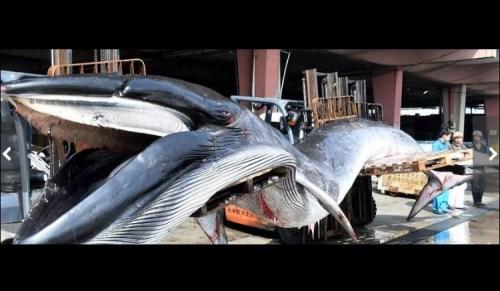 横須賀 クジラ