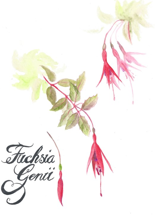 2013 11 04 Watercolour Fuchsias