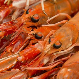 Fish Shellfish Workshop at the Edinburgh New Town Cookery School