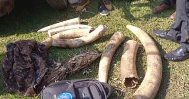 Over 100 arrested in Uganda and Kenya over cyber wildlife trafficking – AWF