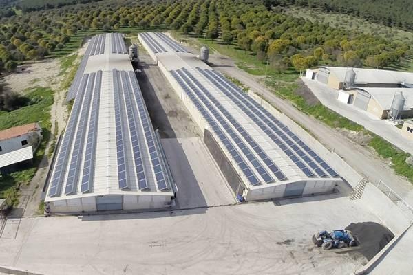 Ali-Süreyya-Perçin-Tavuk-Çiftliği