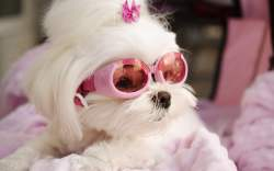 Bolsos Miniatura para Perros