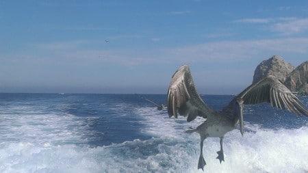 tour de pesca en Cabo San Lucas