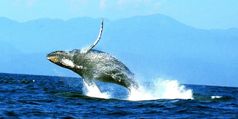 Avistamiento de ballenas en Puerto Vallarta