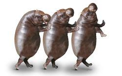 Hipopótamo persiguiendo un yate