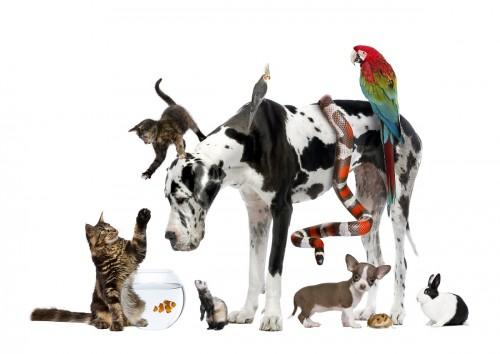 mascotas según tu personalidad