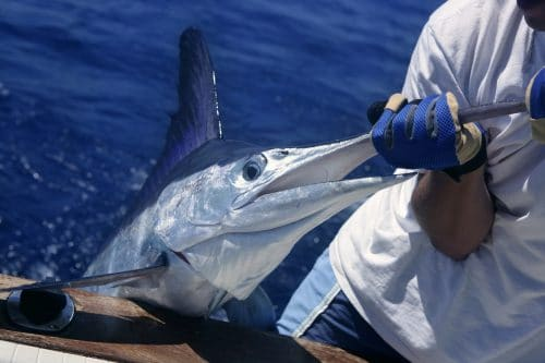 Bisbee: El torneo de pesca más esperado del año