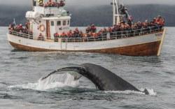 temporada de ballenas en la república dominicana