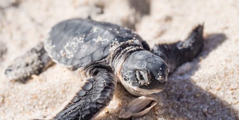 liberación de tortugas marinas en Cabo