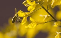 jardin para abejas, como hacer un jardín para abejas, abejas y flores, consejos de jardineria, jardinería en casa, consejos para cuidar las plantas