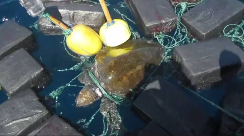 VIDEO... Capturan una tortuga con 800 kilos de cocaína.