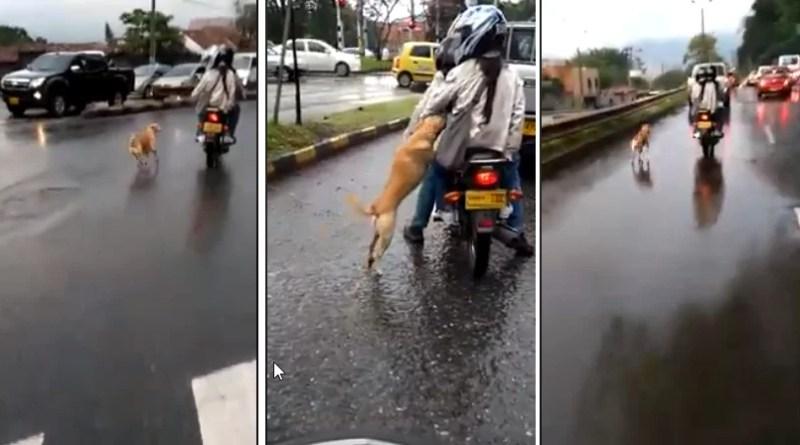 VIDEO... La verdad sobre el canino que supuestamente fue abandonado
