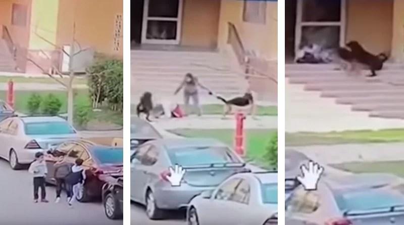 Dos perros atacan a un niño y si no es por una mujer las cosas hubieran salido muy mal