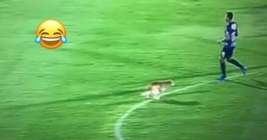 Un perro hizo sus necesidades en pleno partido de la Liga Águila 2019-2