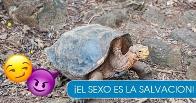 """Diego, el macho """"dominante"""" que salvo a su especie"""