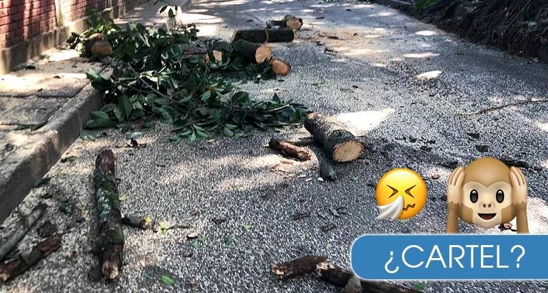 ¿Qué estría acabando con los árboles en Cali? R: ¡´Cartel de la madera'!
