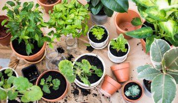 smart cities garden sharing