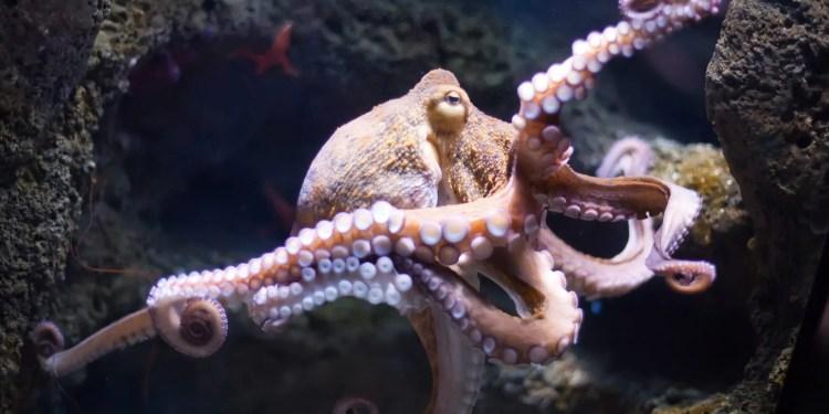 internet of things octopus