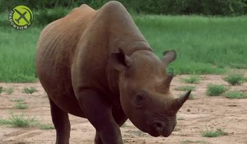 LoRaWAN black rhinos