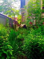Entertaining Family: Rain Garden
