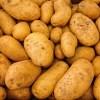 「ポテトチップス」の販売休止相次ぐ 去年の台風の影響で北海道産じゃがいも不作|商品ニュース