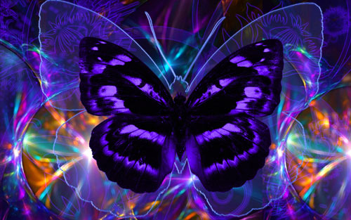 glowing butterfly wallpaper