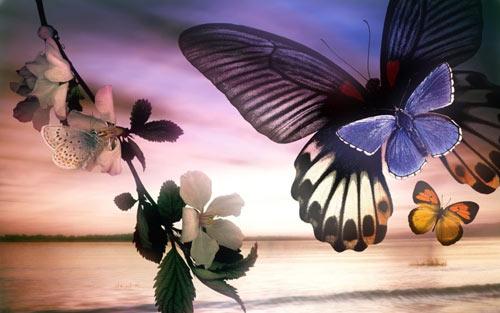 free butterflies wallpaper