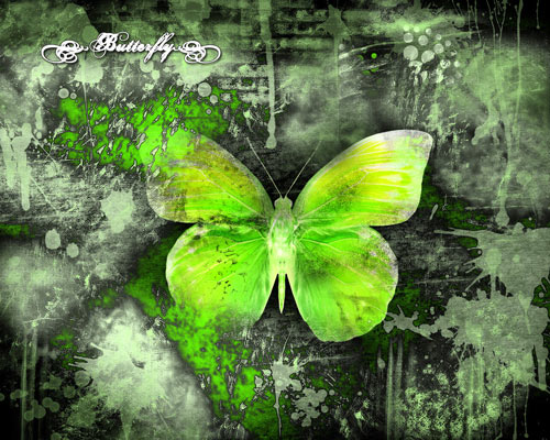 green butterfly painting wallpaper