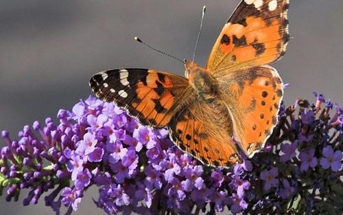 Butterfly On Leaf Wallpaper