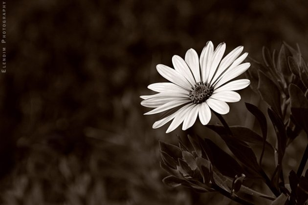 examples of Beautiful Flower Photography