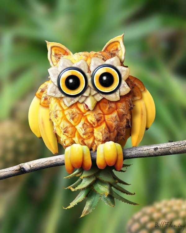 fruit hoot