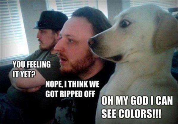 funny dog looks image