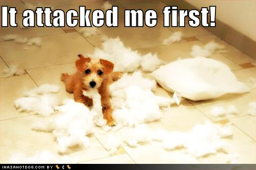 it attacked me first funny dog