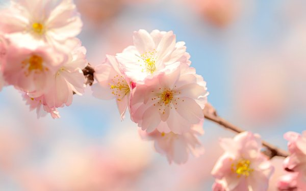 spring flowers wallpaper 1