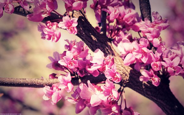 spring flowers wallpaper 3
