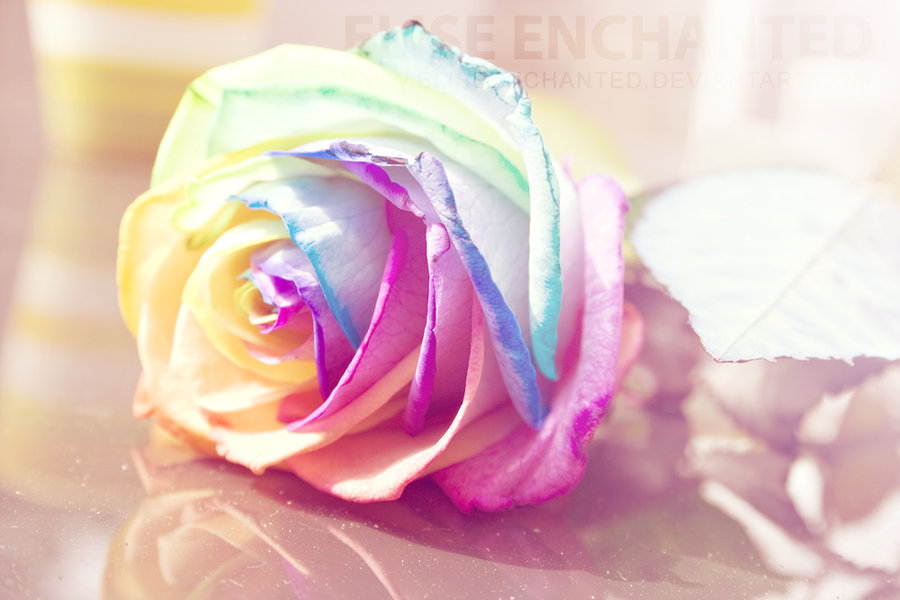 30 Beautiful And Romantic Pictures Of Rose Flower Entertainmentmesh
