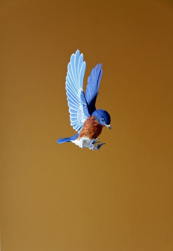 beautiful bird flying picture