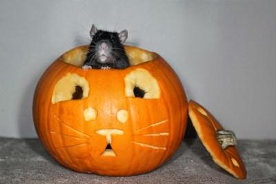 funny-halloween-animals