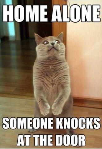 cute-funny-Cat-meme-31